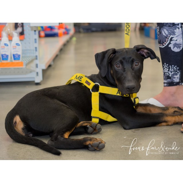 Photo of Sierra **Adopted & On Trial With My New Family**