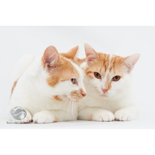 Photo of Peach And Mama Rosa