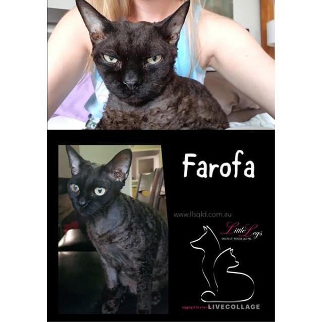 Photo of Farofa