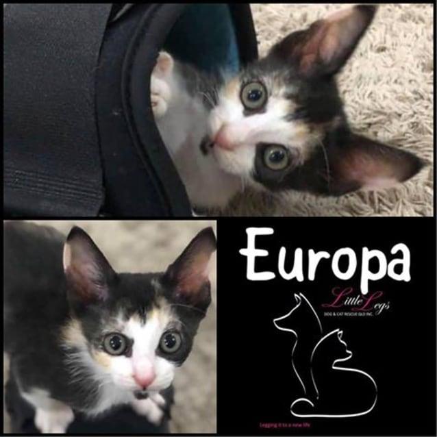 Photo of Europa