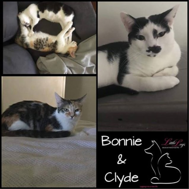 Photo of Bonnie & Clyde