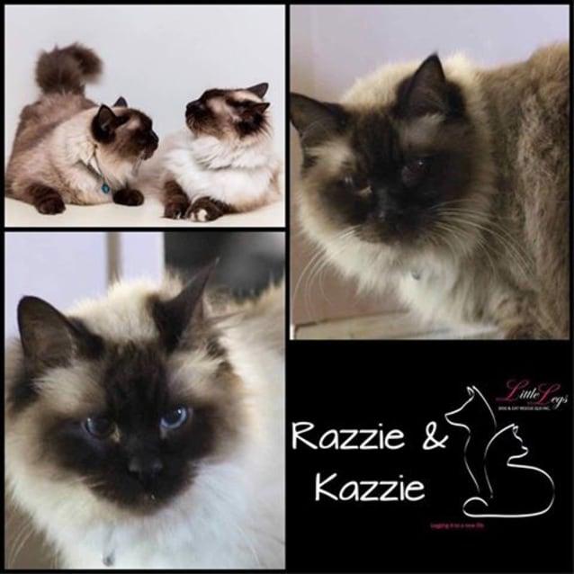 Photo of Razzie And Kazzie
