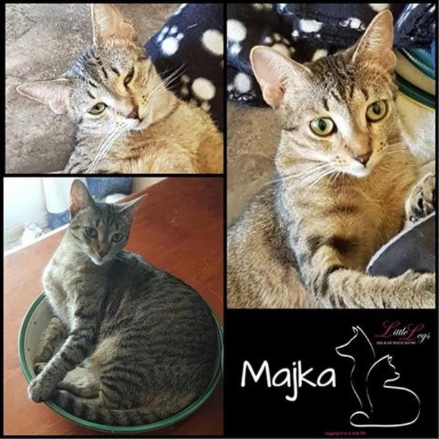 Photo of Majka
