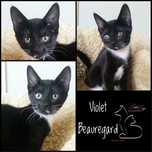 Photo of Violet Beauregarde