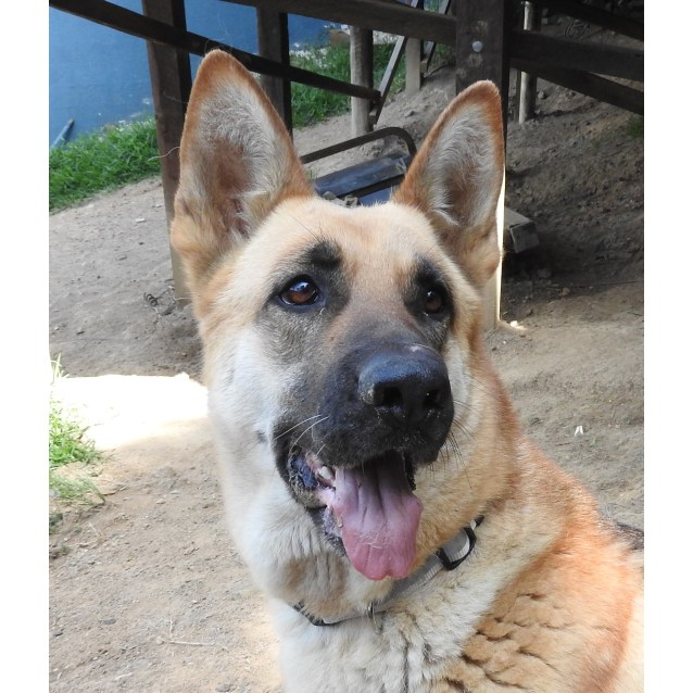 Photo of Ivy (Bonded With Arthur)
