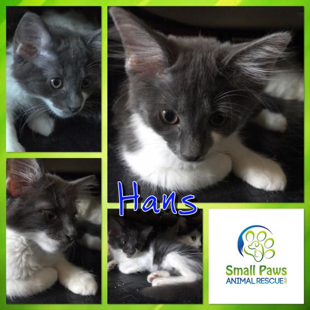 Photo of Hans