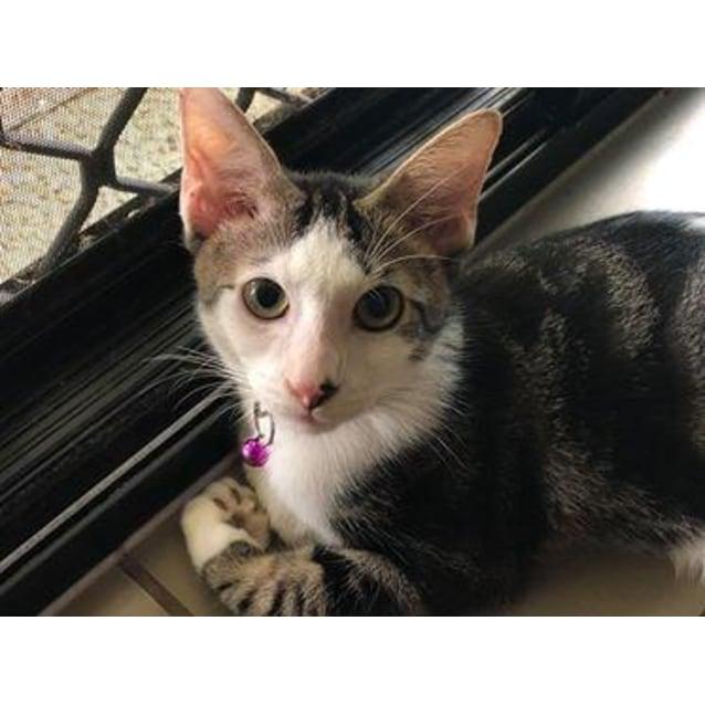 Photo of Twinkle/Milo