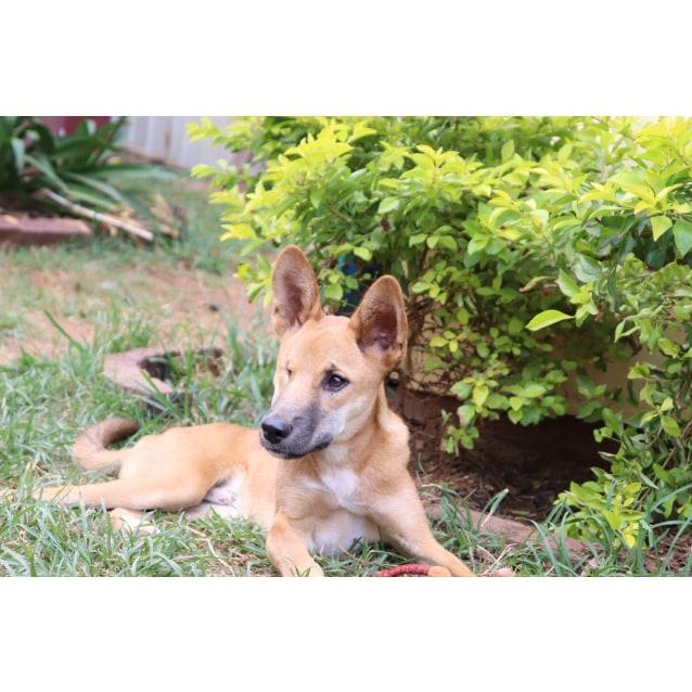 Photo of Kirima