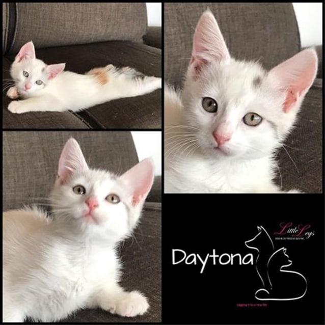Photo of Daytona