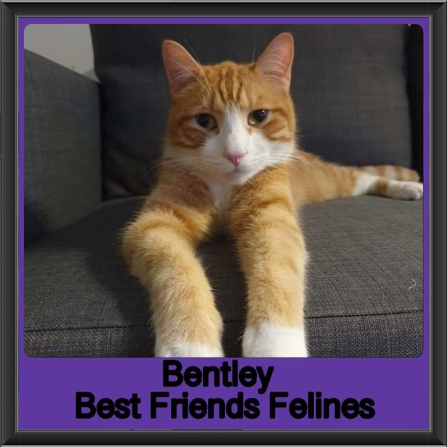 Photo of Bentley