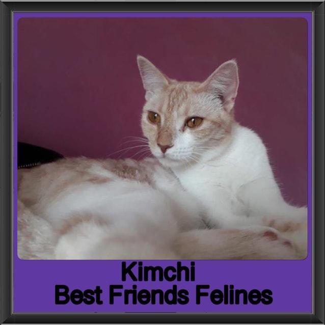 Photo of Kimchi