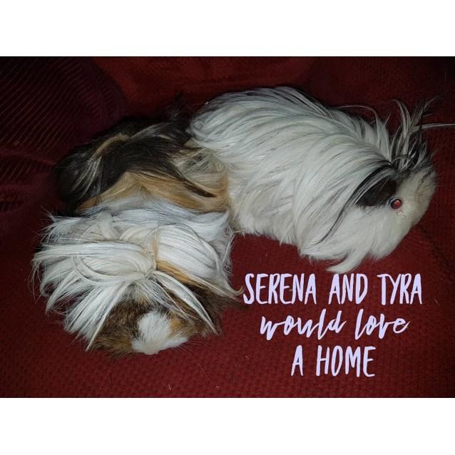 Photo of Serena ( Buddy Of Tyra)