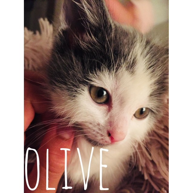 Photo of Olive (Located In Brighton East)