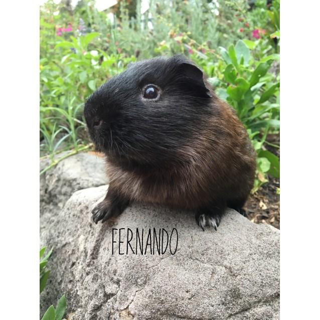 Photo of Fernando