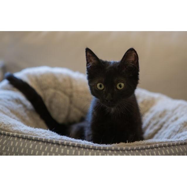 Photo of Onyxia