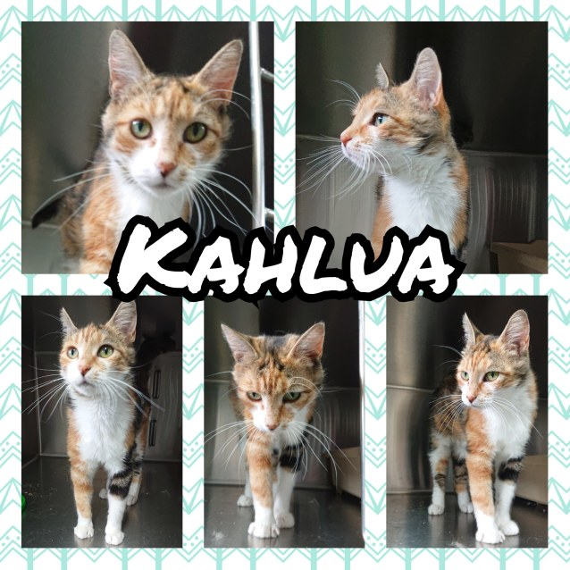 Photo of Kahlua