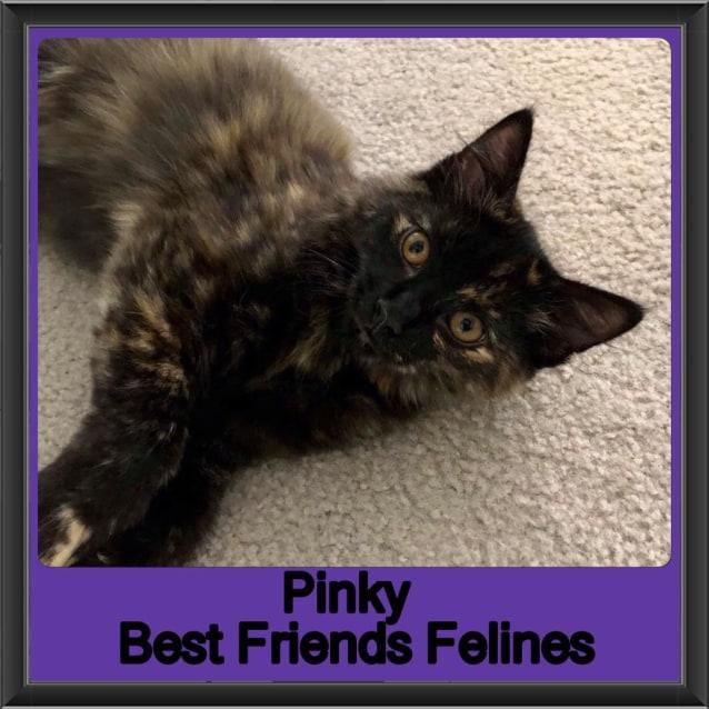 Photo of Pinky