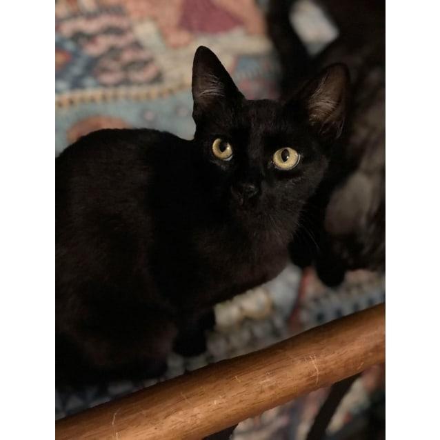 Photo of Hazel