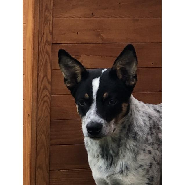 Photo of Flynn