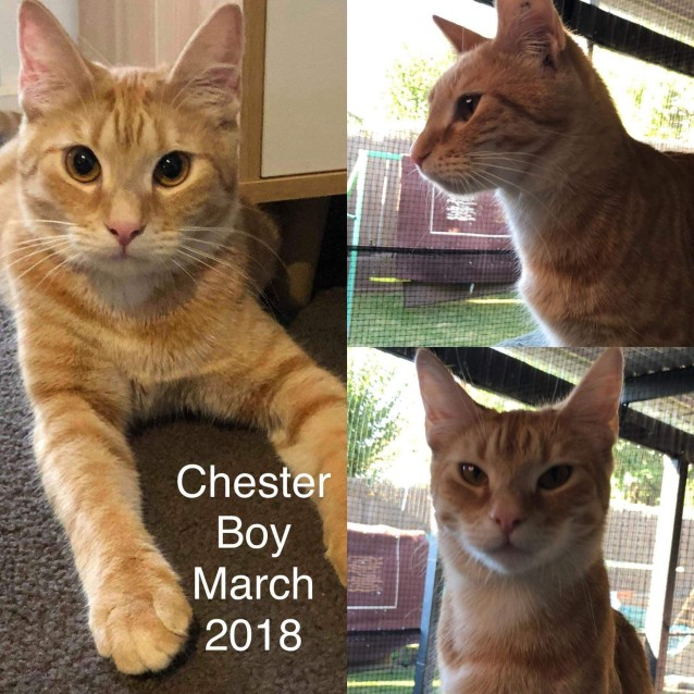 Photo of Chester