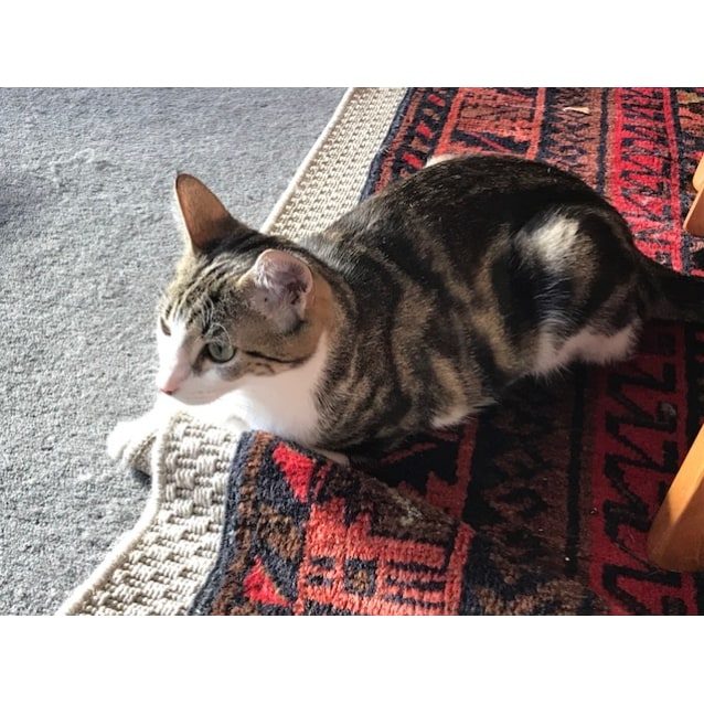 Photo of Millie (Located In St Kilda)