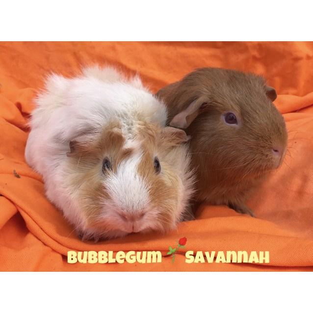Photo of Bubblegum & Savannah