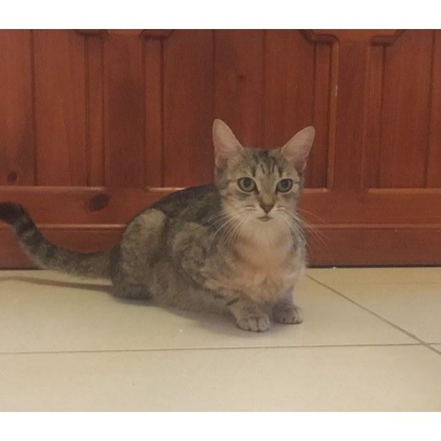 Photo of Mimos
