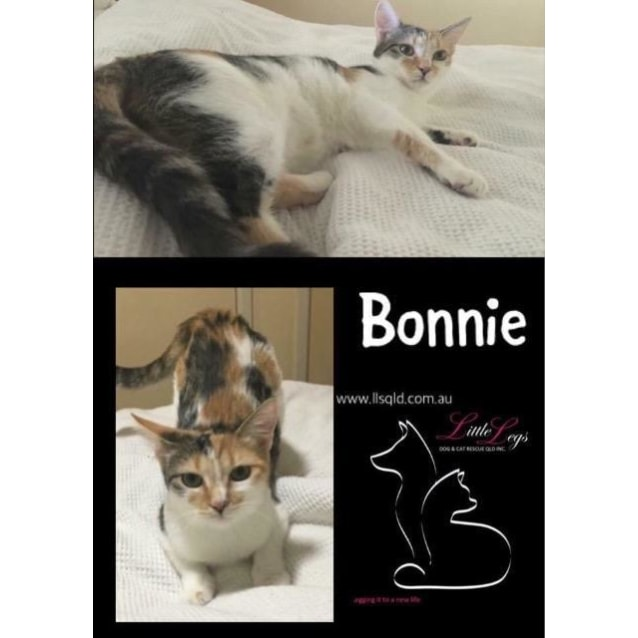 Photo of Bonnie / Clyde