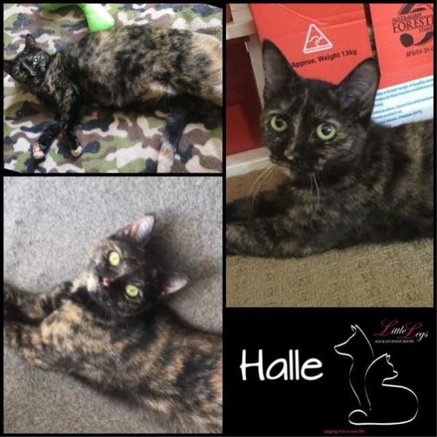 Photo of Halle