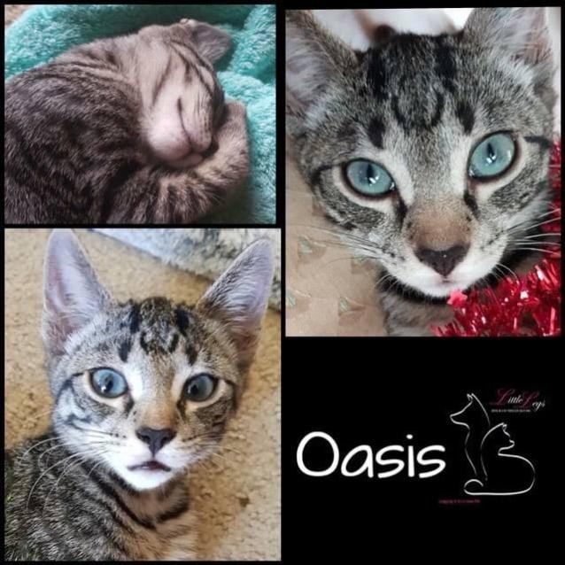 Photo of Oasis