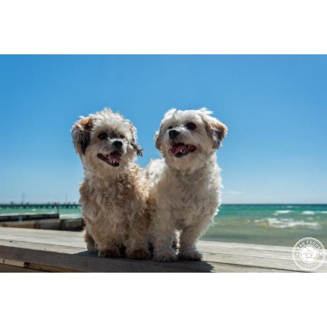 Photo of Lulu & Lilly Upton