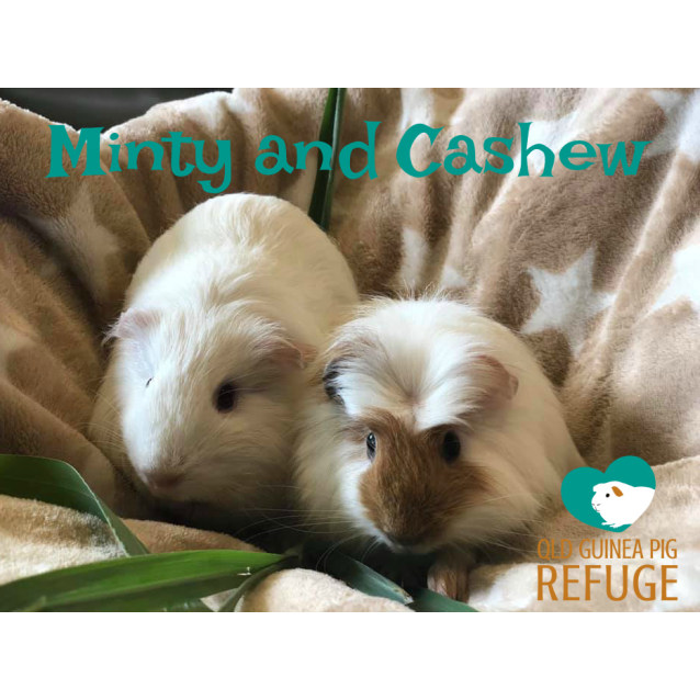 Photo of Minty And Cashew (Indoor Home Only)
