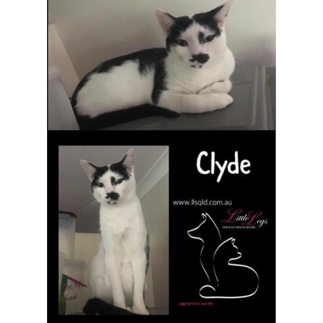 Photo of Clyde / Bonnie