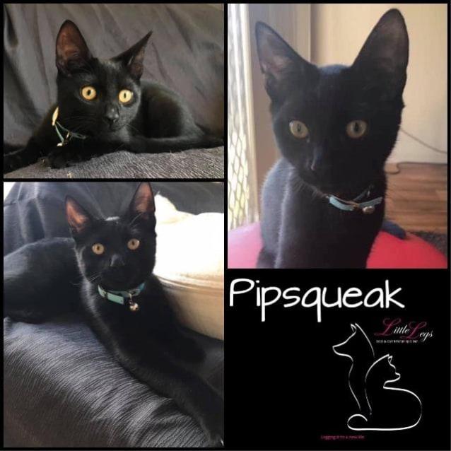 Photo of Pipsqueak