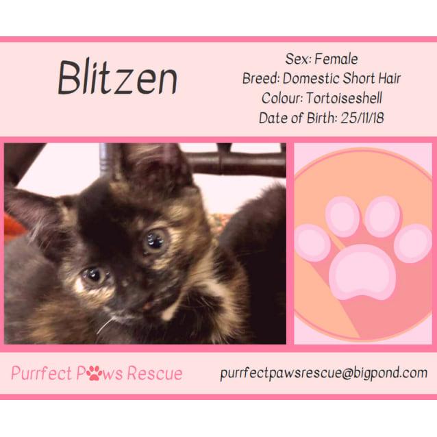 Photo of Blitzen