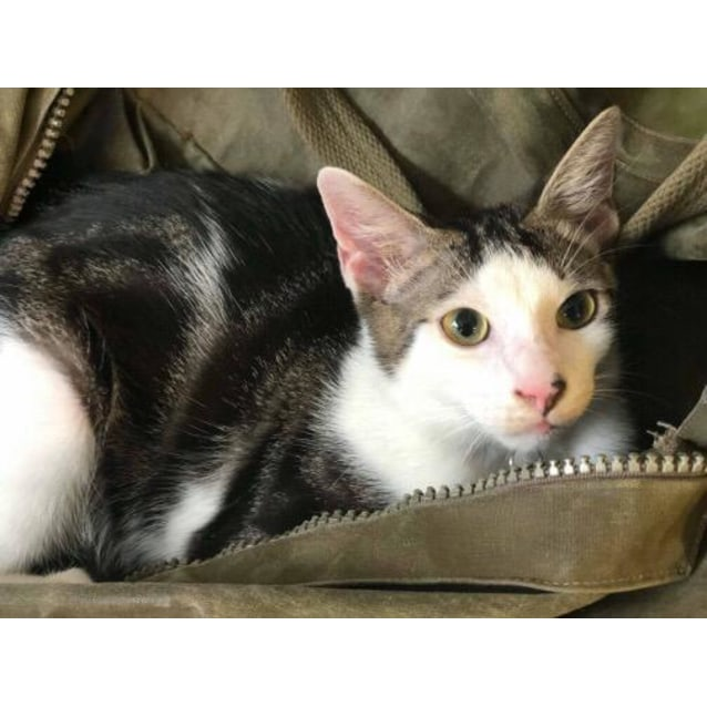 Photo of Milo (Twinkle)