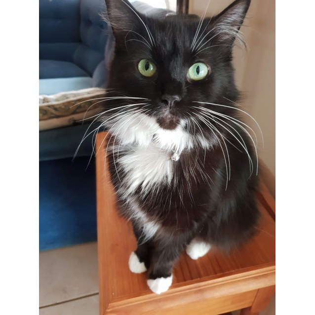 Photo of Cleo (Located In Seabrook)