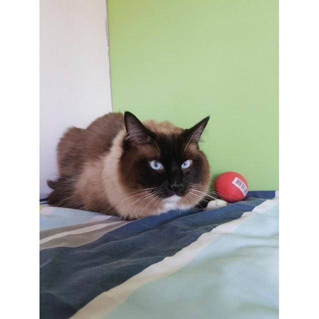 Photo of Coco #2