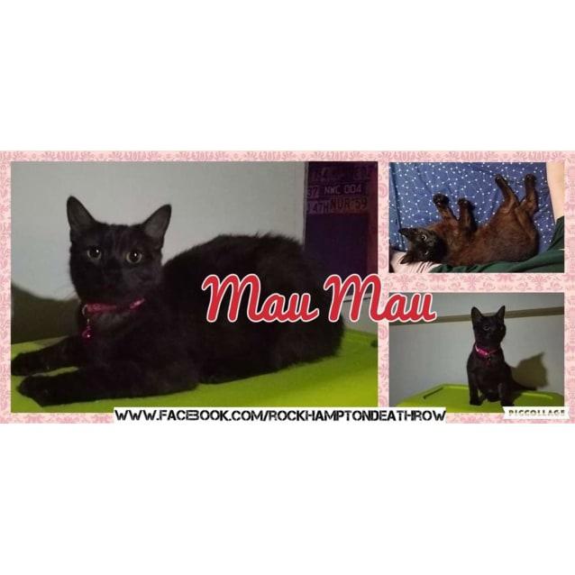Photo of Mau Mau
