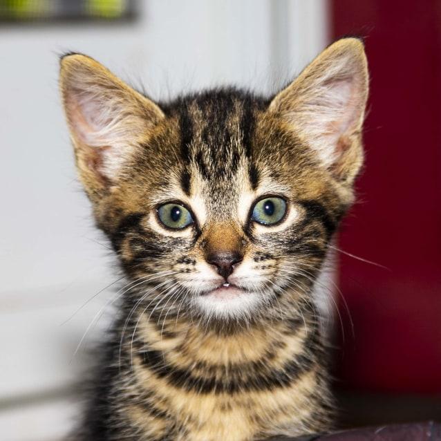 Photo of Sass ~ Kitten