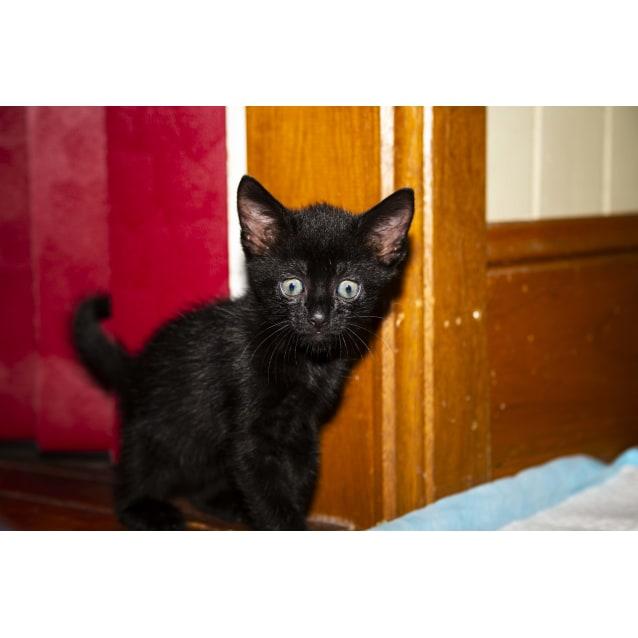 Photo of Shadow ~ Kitten