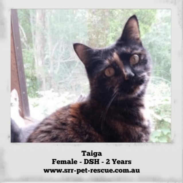 Photo of Taiga