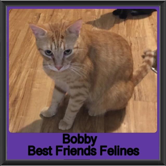 Photo of Bobby