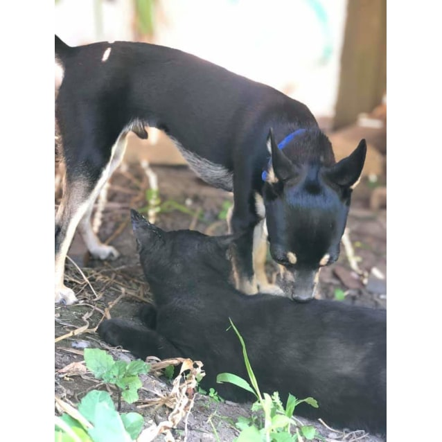 Photo of Dog, Cat, Chook And People Friendly Kitty