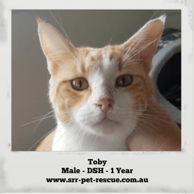 Photo of Toby
