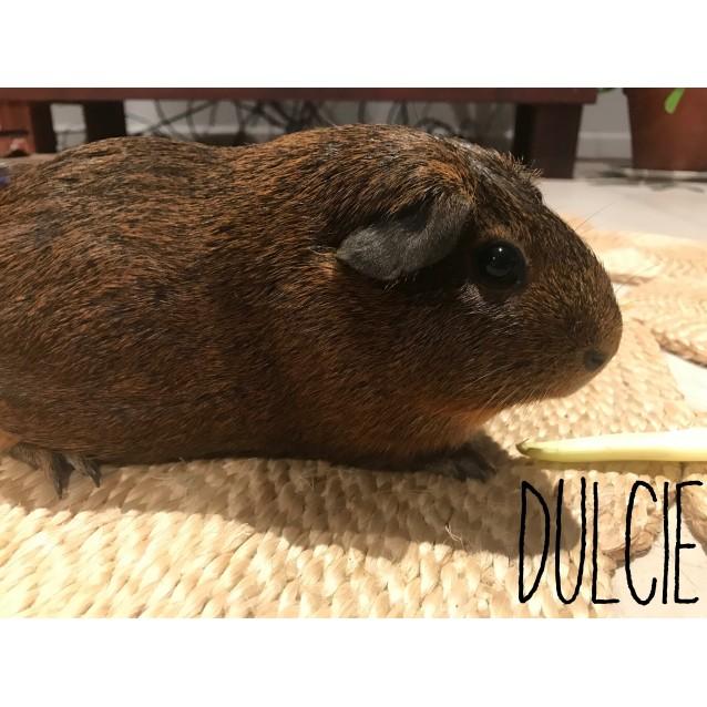 Photo of Dulcie
