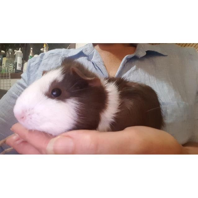 Photo of Truffle