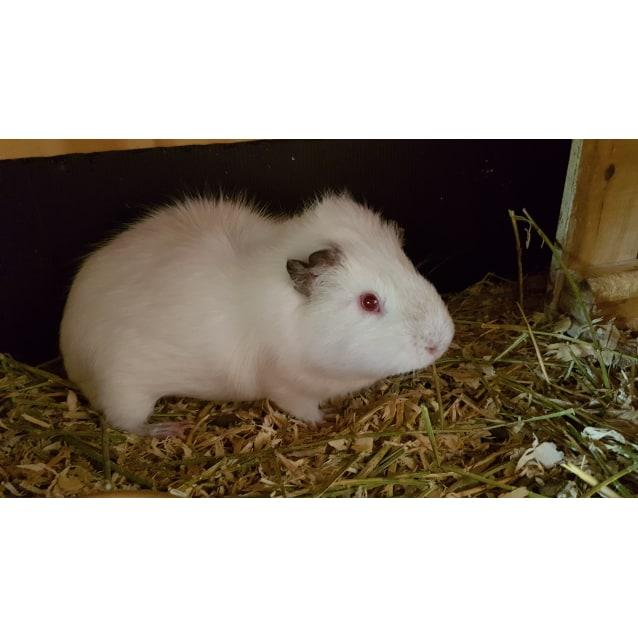 Photo of Snowcone
