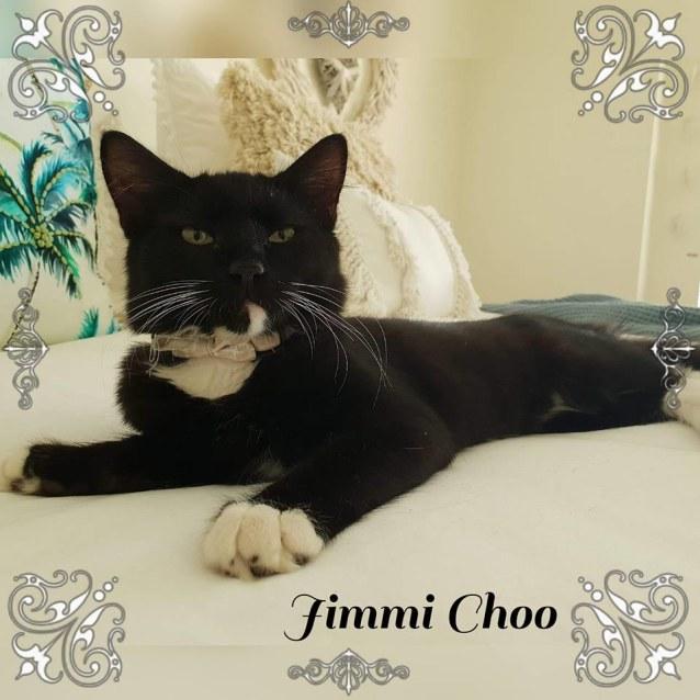 Photo of Miss Jimmi Choo