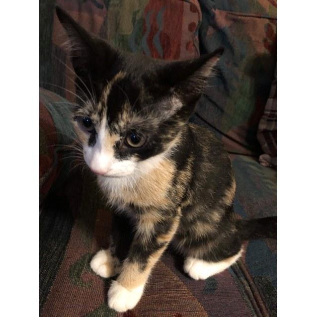 Photo of Poppie
